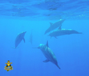 Swimming with WILD dolphins!